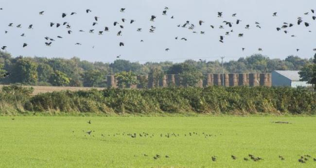 The NFU has issued advice for its members over wild bird control licences