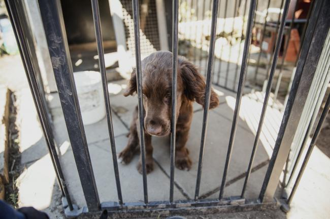 Puppy and kitten farms will be banned from this year