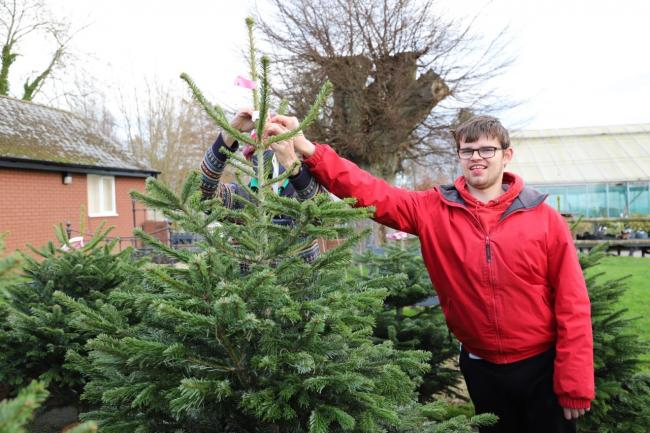 Student Ryan helps to price up a Christmas tree